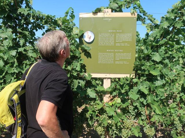 Am Wegesrand wartet Wissenswertes über den Wein.
