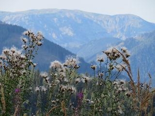"""18.08.2018 Blick vom """"Bründlweg"""" Start vom Pogusch Pass bei Turnau Steiermark http://www.turnau.gv.at/"""