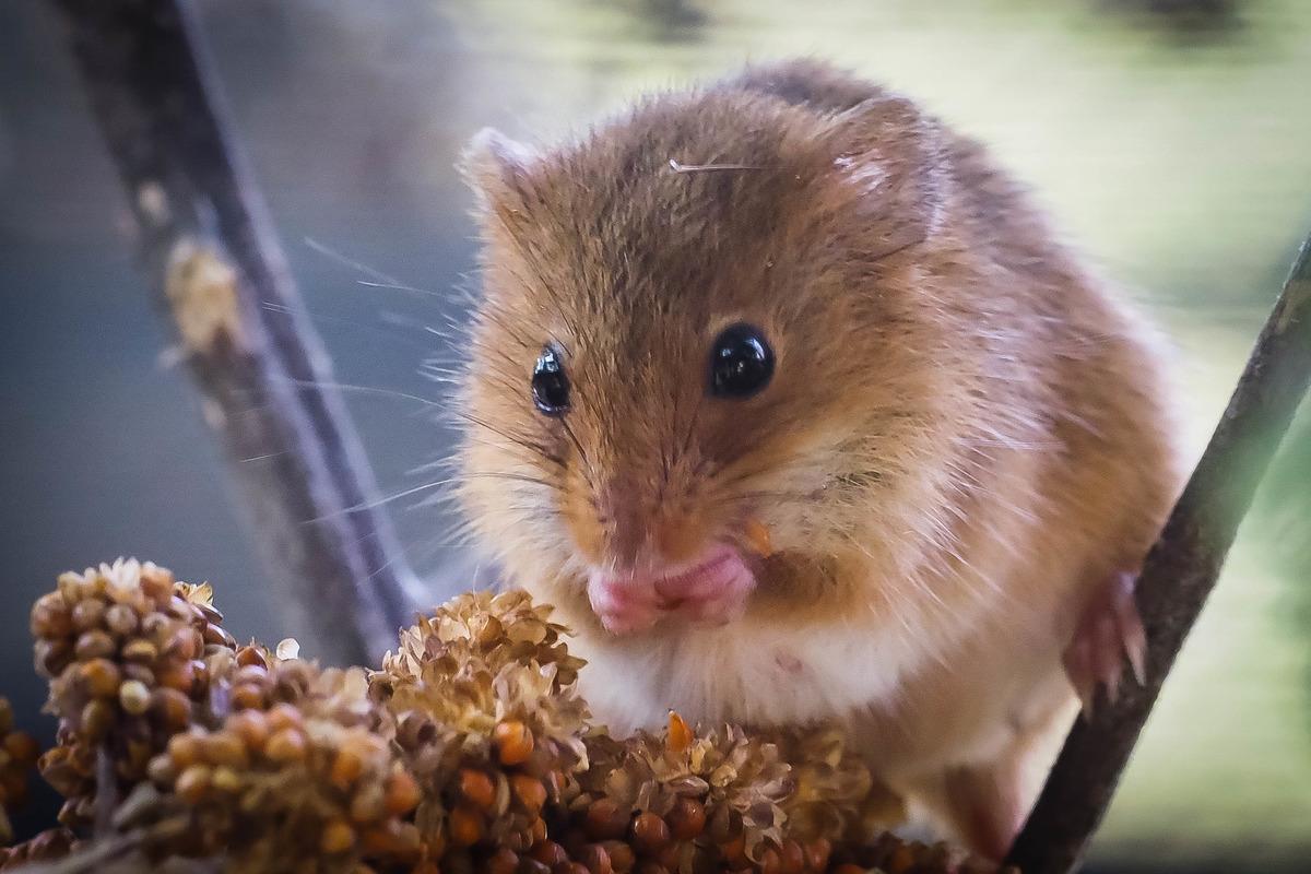 Bist Du Eine Süße Maus Liesing