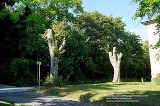 Für jeden gefällten Baum muss ein anderer als Ersatz gepflanzt werden. Doch wer pflegt die jungen Bäume am Steinhof?