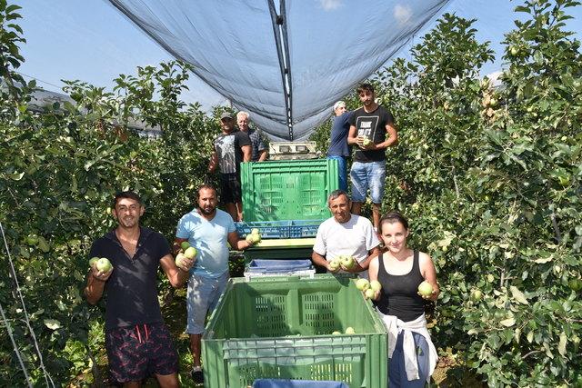 Tafeläpfel, wie sie bei Obstbau Zinner in Kukmirn geerntet werden, verkaufen die Supermärkte zu Schleuderpreisen.