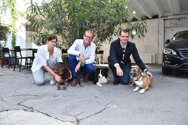 Bürohunde: Dimpel, Livia und Jamie (v.l.n.r.) fühlen sich in der bz-Redaktion wie zuhause.