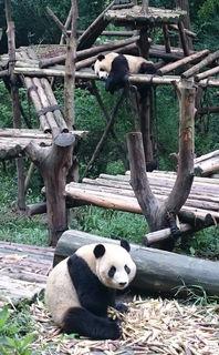 Fotocredits: Klemens Hofer  - Barbara Westermayer aus Matzen und Klemens Hofer aus Auersthal in Chengdu/China