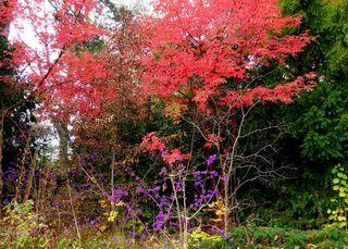 © by Gerhard Singer / Es gibt eine Stille des Herbstes bis in die Farben hinein (Hugo von Hofmannsthal)