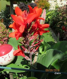 Blumenrohr in Nachbars Garten.