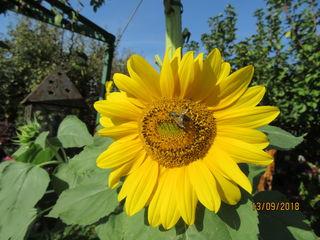 Eine schöne Woche wünscht die Sonnenblume und ich