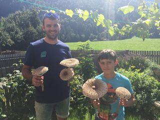 Ein schönes Foto von seiner Beute schickte Stefan Obermoser an das Bezirksblatt Kufstein. Er fand beim Spaziergang in Wörgl fünf wunderbare Parasol Pilze. Sohn Fabian ist auch stolz.