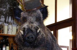 """Heute gibt es """"Wildschweinbraten"""" in  meinem Stammlokal  © by Gerhard Singer"""