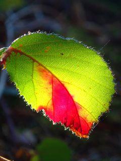 ..., den der Künstler Herbst auf einem Blatt hinterlassen hat