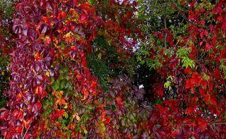 """Der Herbst zieht seine """"bunte Spur"""" schon kreuz und quer durch die Natur. © by Gerhard Singer"""