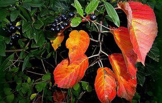 Heute, Sonntag, exakt um 3.54 Uhr beginnt der Herbst ❀ © by Gerhard Singer