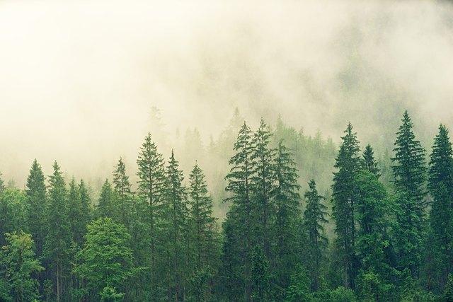 Bei Stürmen sollte man sich nicht in Wäldern aufhalten Credit: pixabay