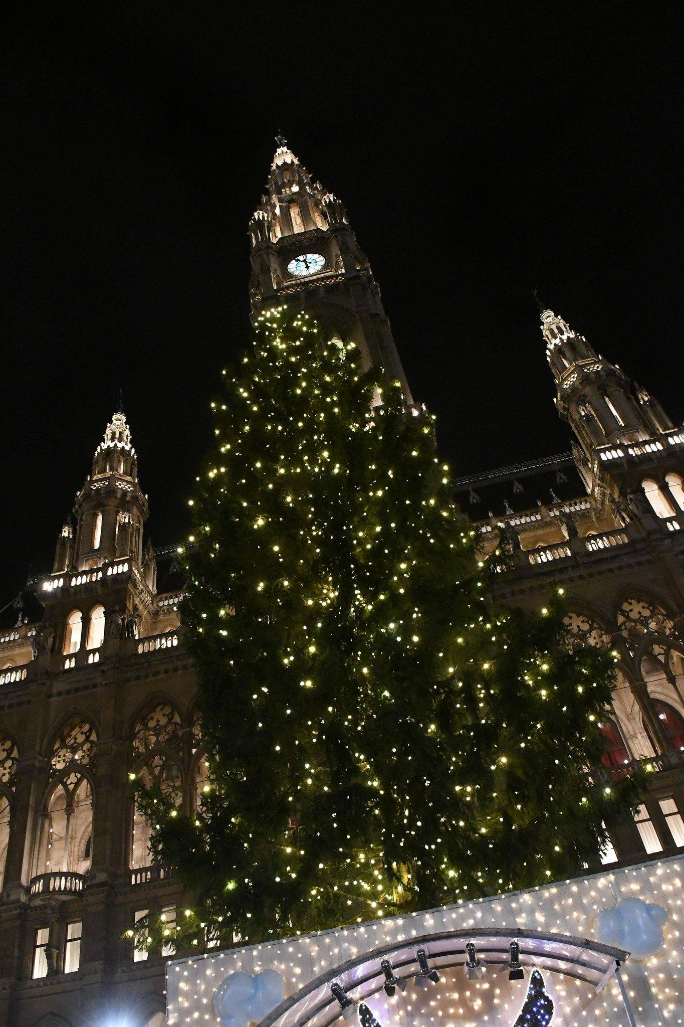Weihnachtsbaum Herkunft.Weihnachtsbaum Am Wiener Rathausplatz Stammt Heuer Aus Metnitz St
