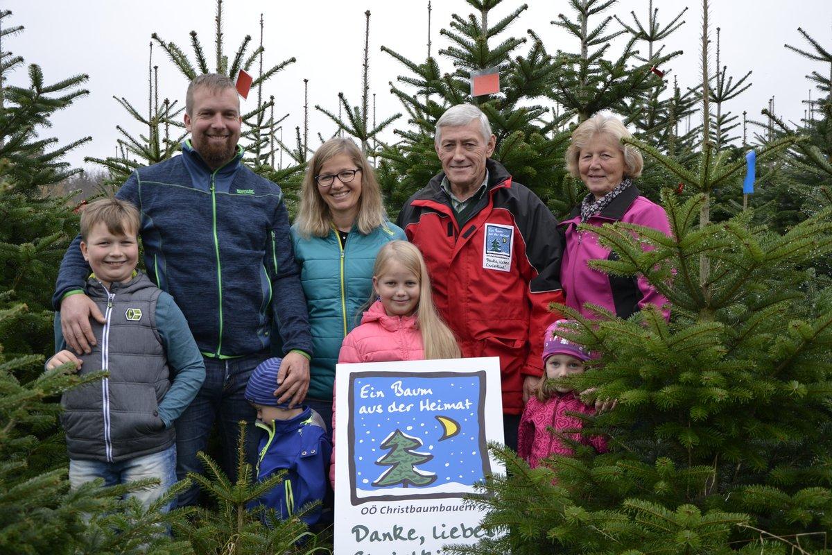 österreich Weihnachtsbaum.Christbaumkauf Weihnachtsbaum Aus Region Bleibt Länger Frisch