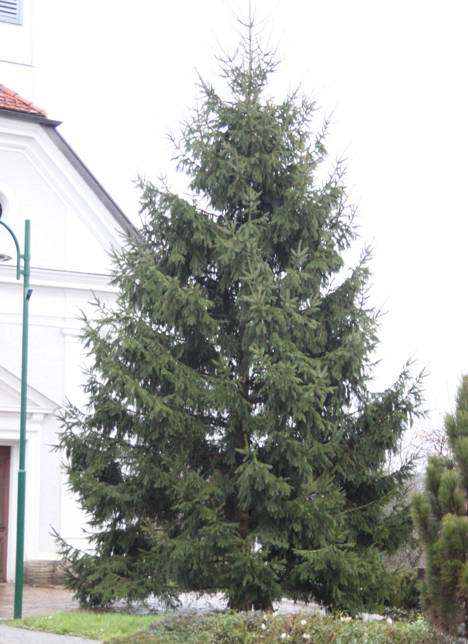 Wann Weihnachtsbaum Aufstellen.Ff übernahm Das Aufstellen Weihnachtsbaum In Rassach Deutschlandsberg