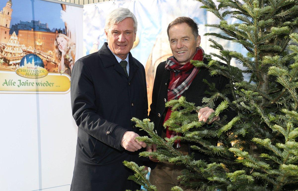 Bilderbuch Tannenbaum.Tannenbaum Thema Auf Meinbezirk At