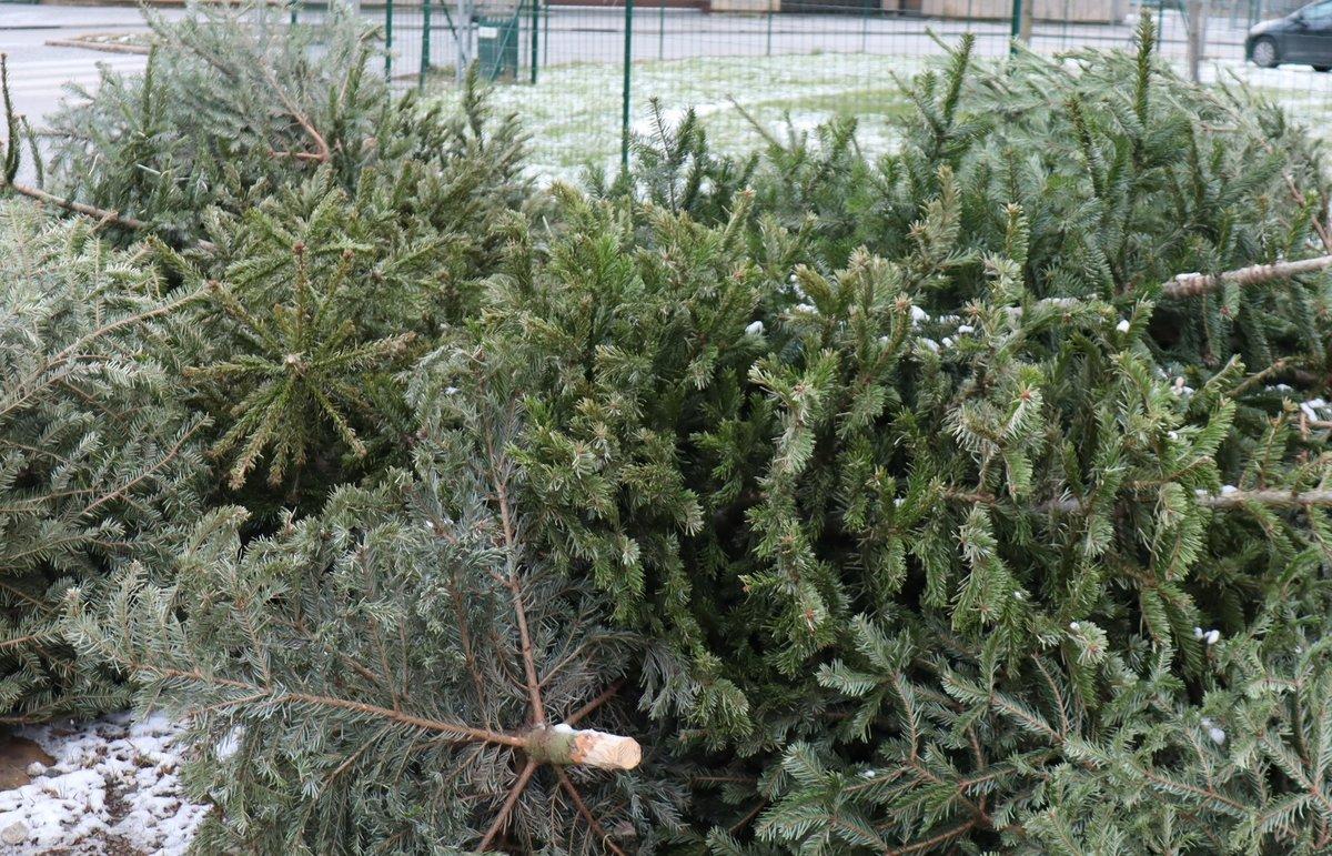 Weihnachtsbaum Engelshaar.Wohin Nur Mit Dem Christbaum Leoben