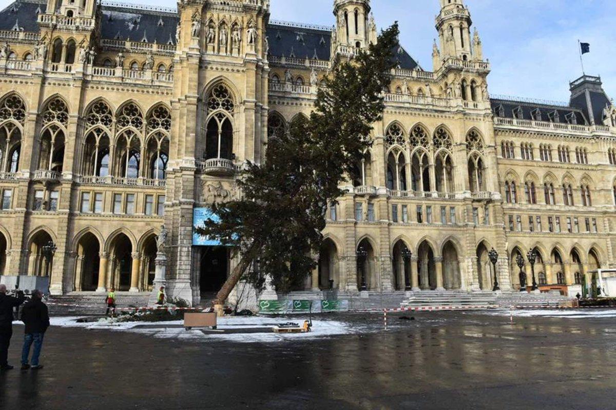 Wie Fällt Weihnachten 2019.Rathausplatz Der Weihnachtsbaum Ist Gefallen Penzing