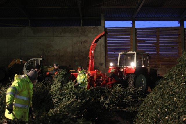 Wien Weihnachtsbaum Kaufen.Weihnachtsbaum Thema Auf Meinbezirk At