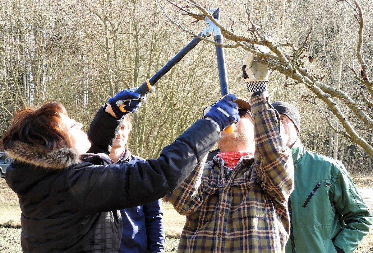 Kursangebot Obstbaume Richtig Schneiden Horn