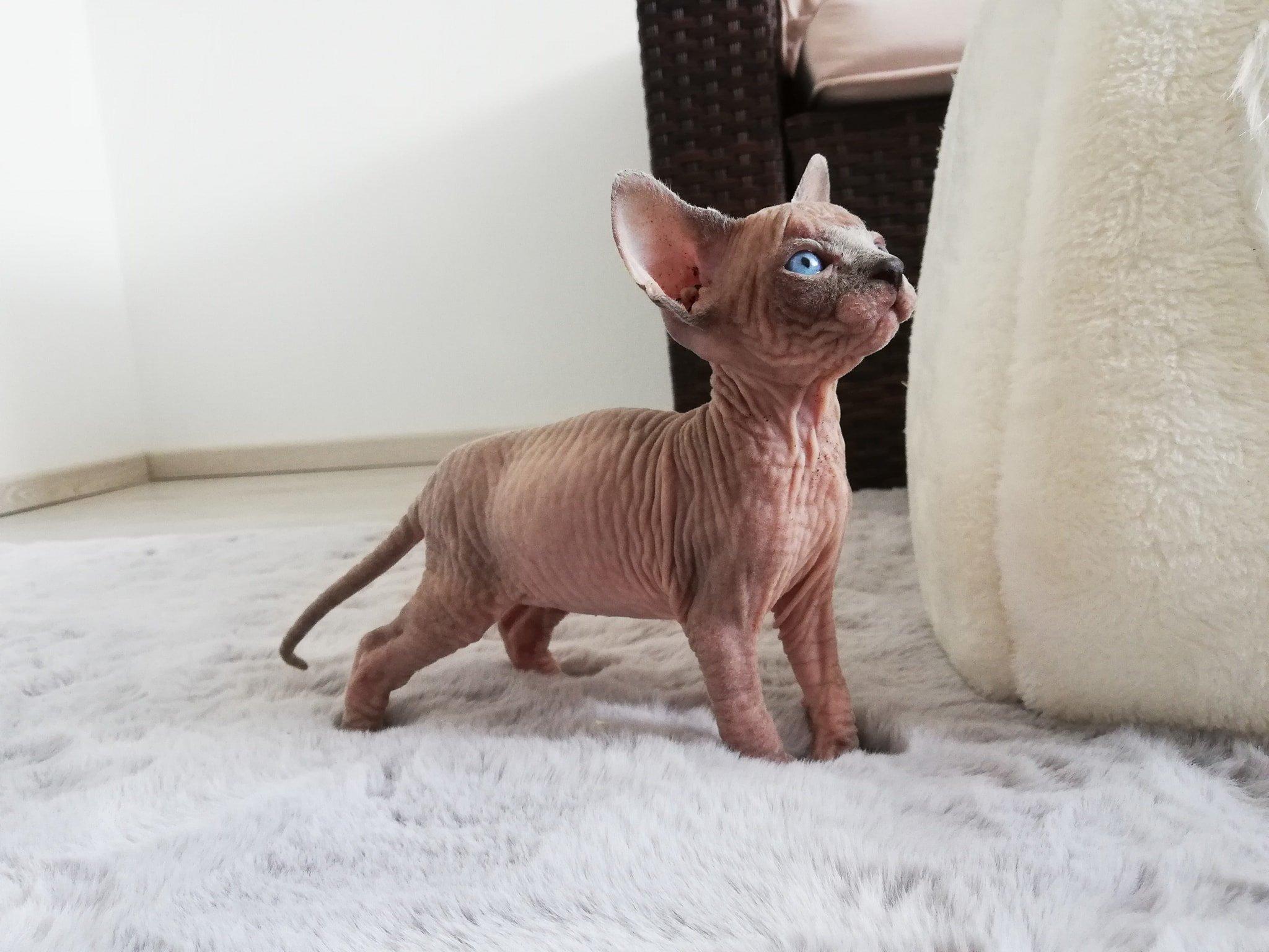 Wir sind süße Baby-Nacktkatzen - Horn