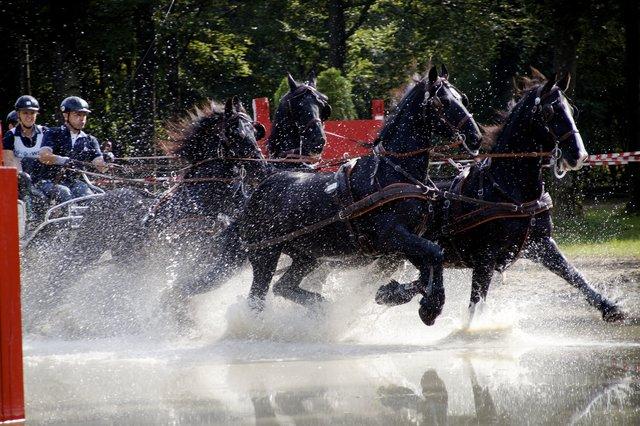Vieles rund um das Pferd in Wels und Wels Land Wels & Wels
