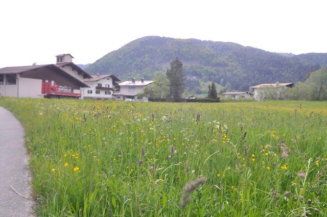 kirchdorf i.wald single app