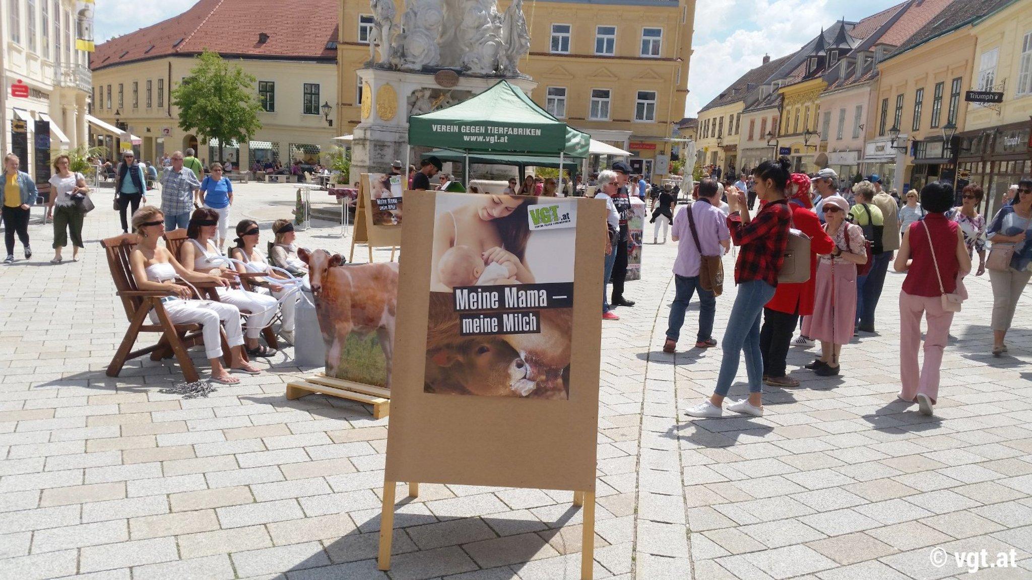 Tierschutz Baden Baden