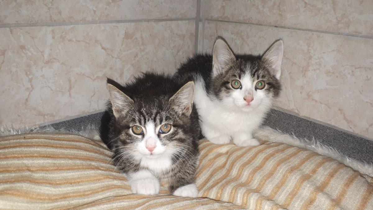 Katze Bild: Babykatzen Zu Verschenken Wiener Neustadt