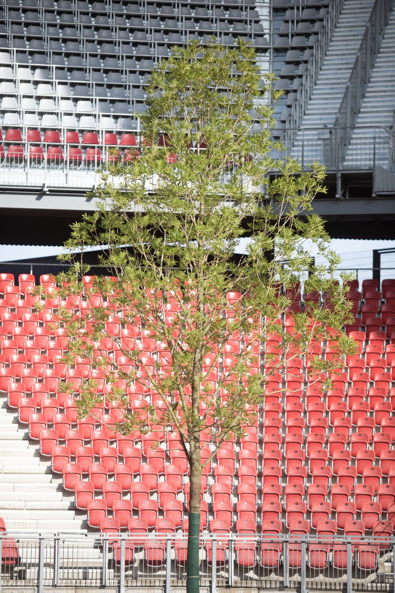 For Forest Littmann Der Erste Baum Im Stadion War Der