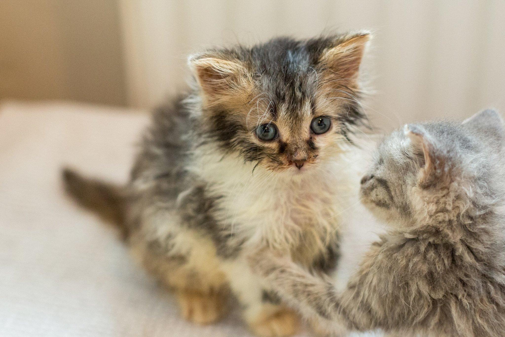 Katzenbabys: Was Du bei Anschaffung und Erziehung beachten