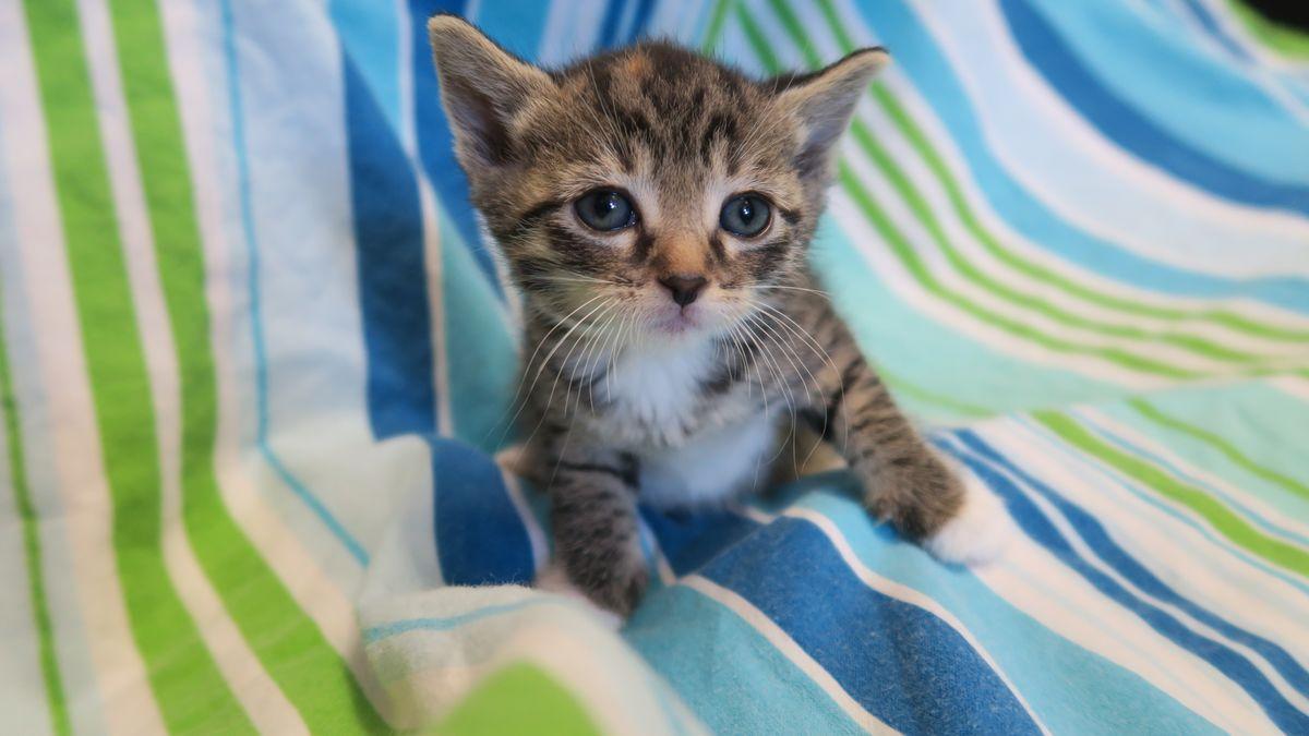 Katze Bild: Baby Katzen Zu Vergeben Burgenland