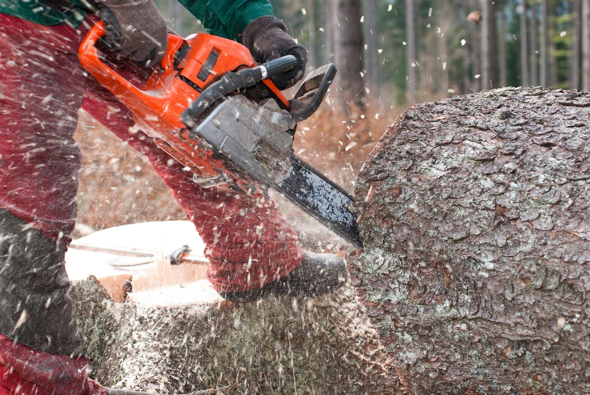 Unfall in Molln: Forstarbeiter von Baum getroffen und schwer verletzt - meinbezirk.at