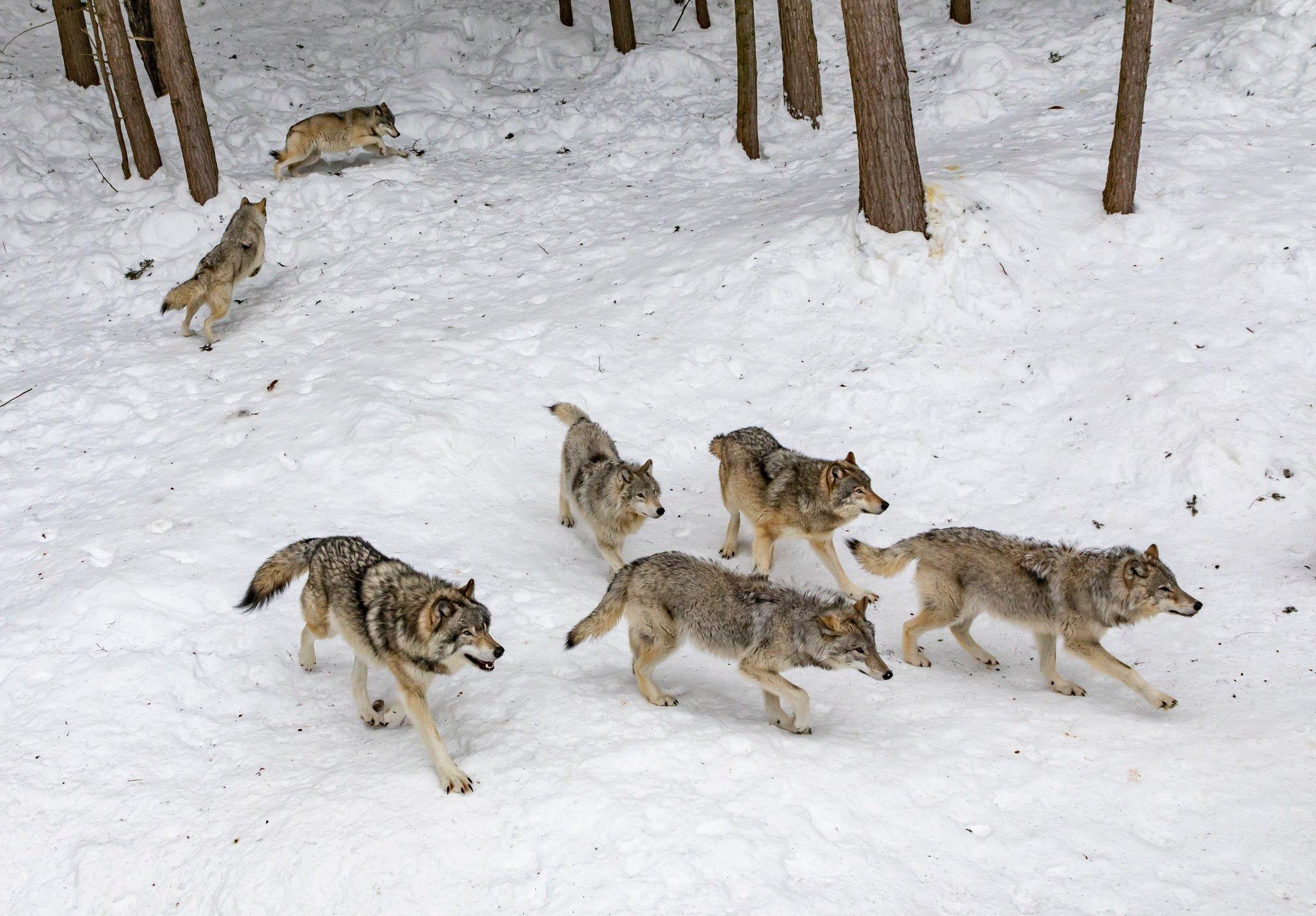 Service-Hotline für Risse durch für Bär, Wolfs und Luchs