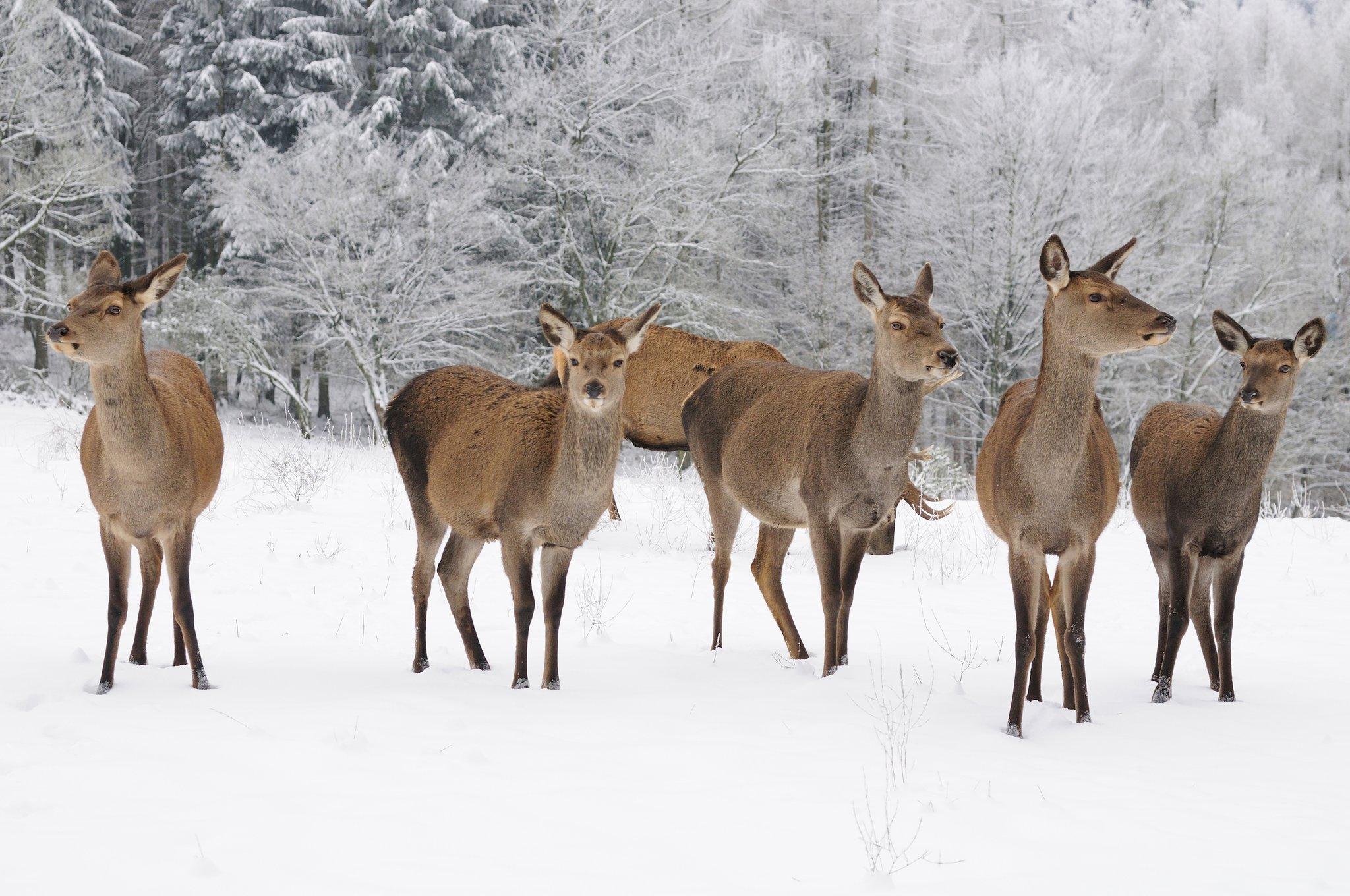 NÖ Jagdverband bittet Lebensraum des Wildes zu akzeptieren: Jäger unterstützen aufgrund von regen Revier Rebhuhn und Fasan dabei, über den Winter zu kommen.