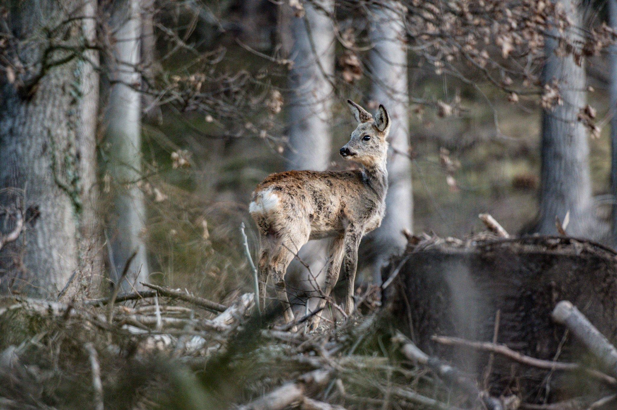 Jagdjahr 2019/2020 im Bezirk Innsbruck-Land: Sehr gute Erfüllung trotz steigender Abschussvorgaben