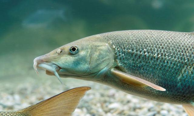Angler Thema auf meinbezirk.at
