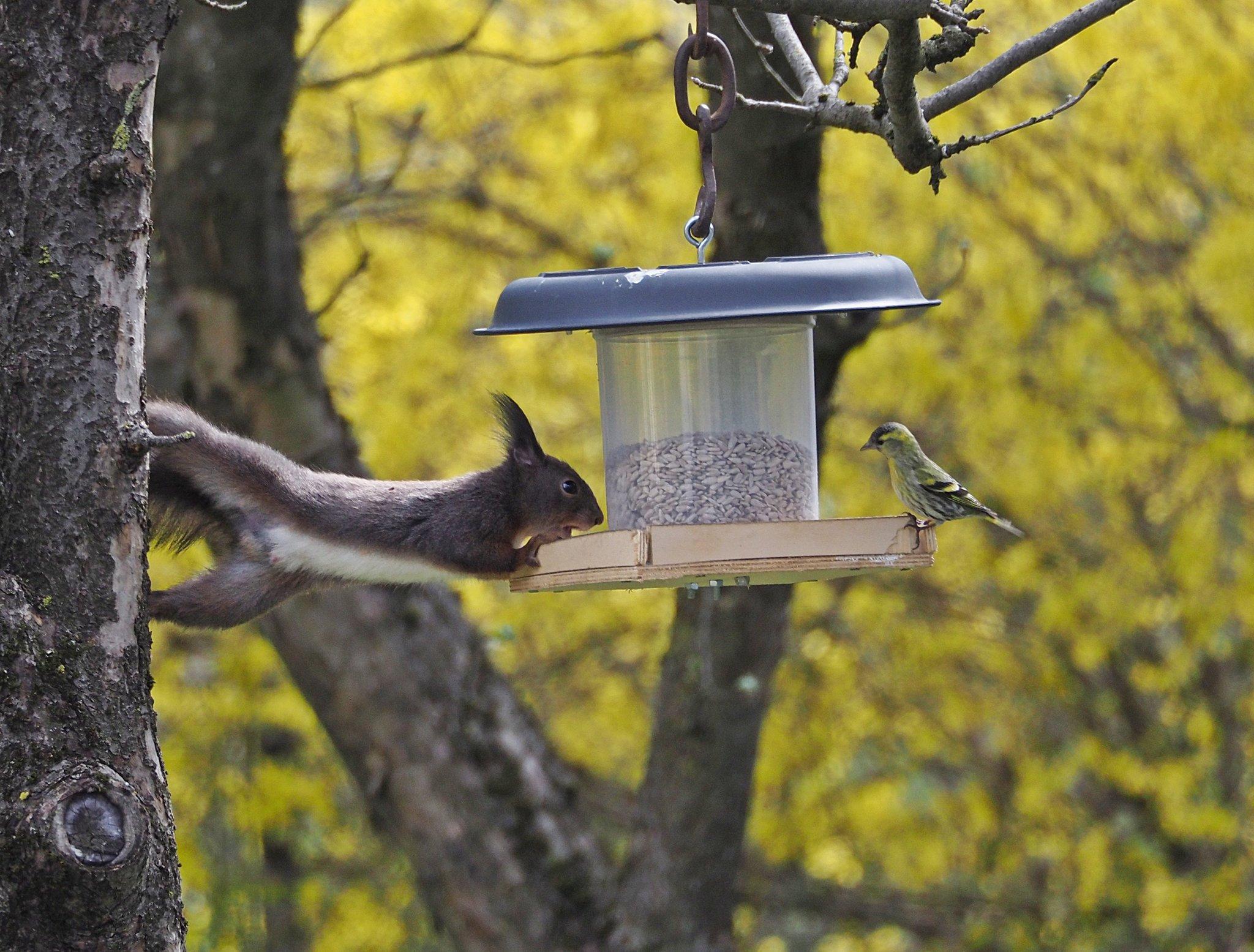 eichhörnchen paar es muss liebe sein mit video  leoben