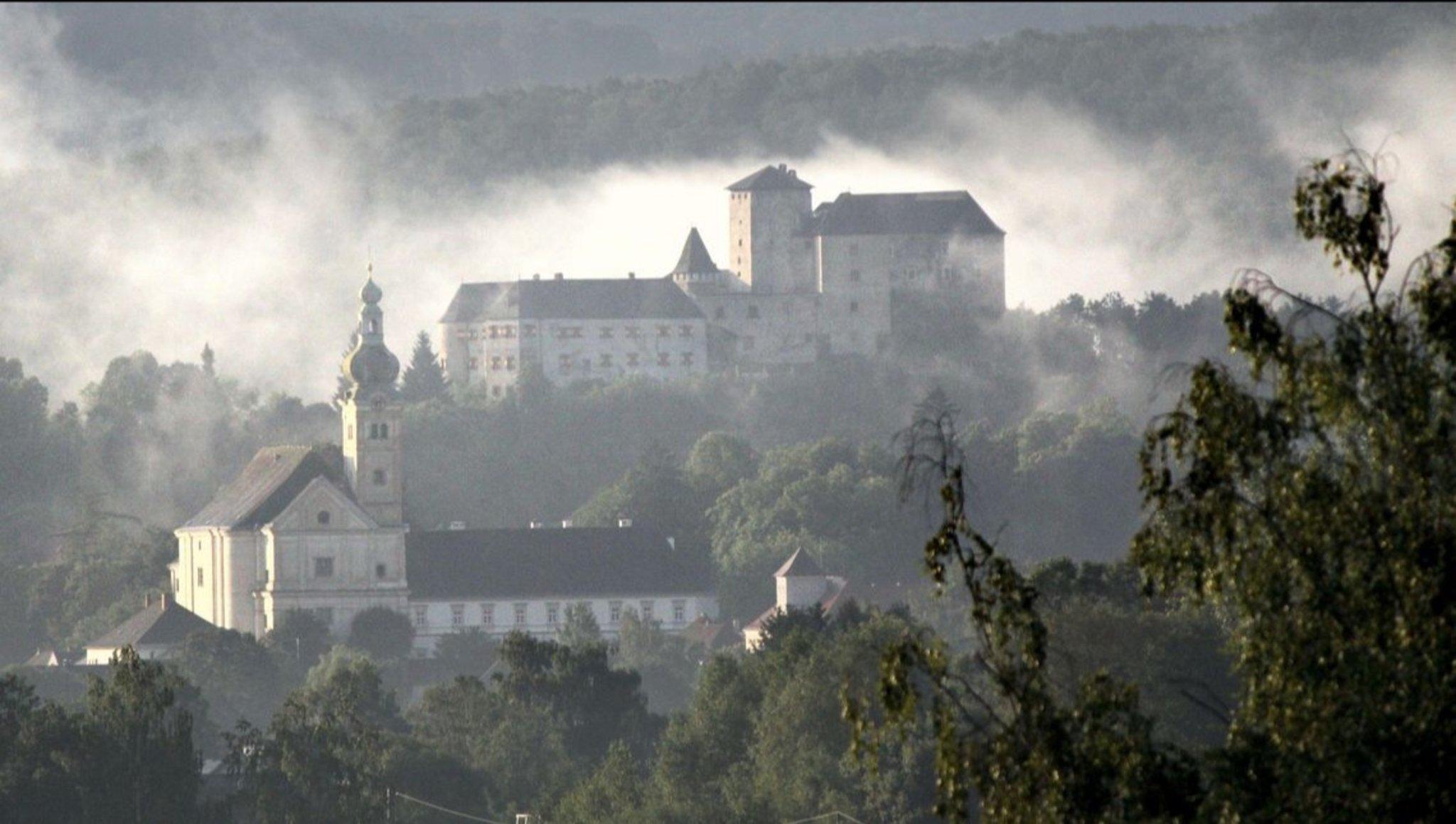 Treffen bei der Burg Lockenhaus - Pillow Talk Whippets