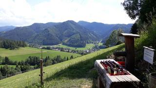 Singletreffen aus gniebing-weienbach. Wolfsberg single