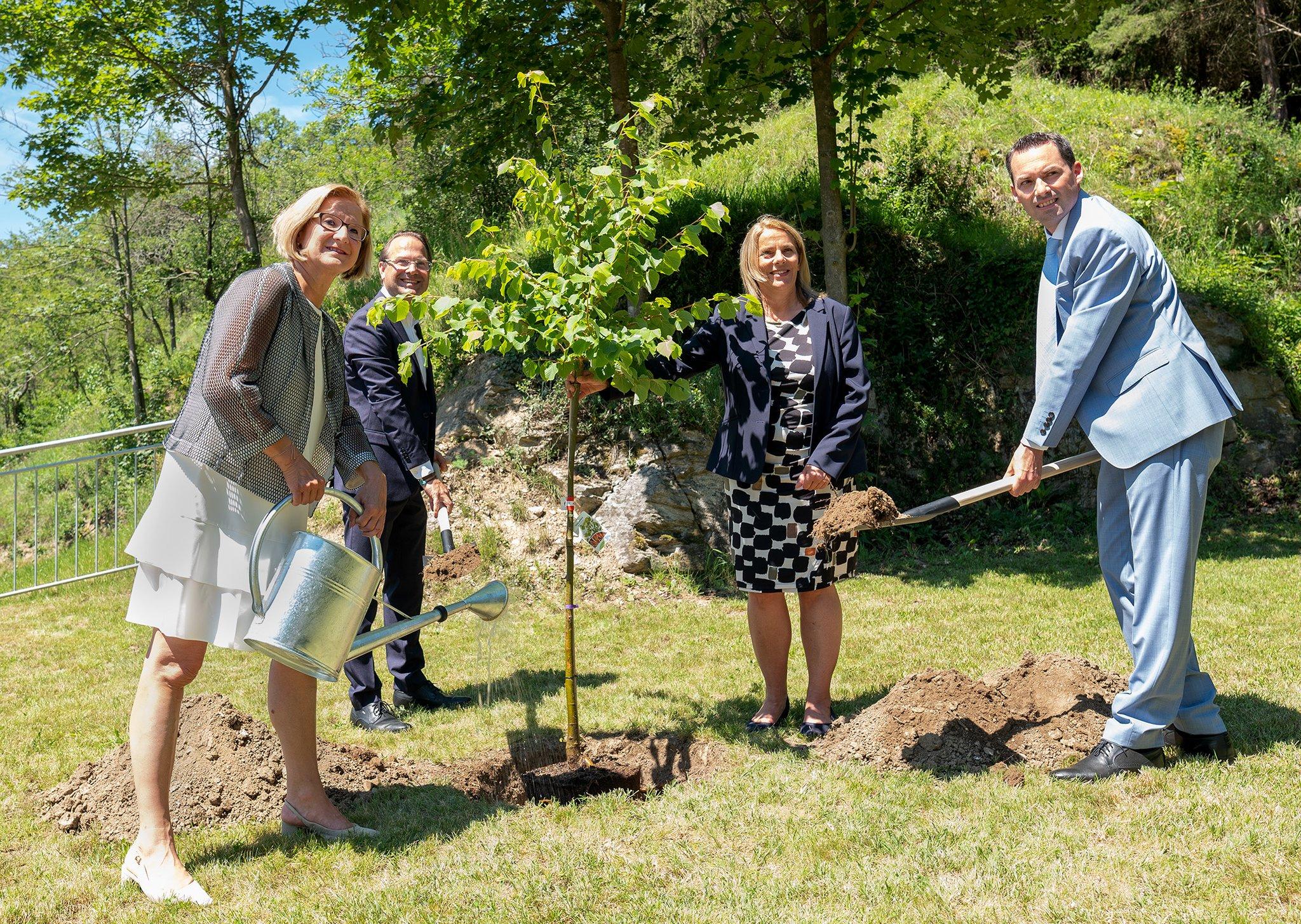 Erster zertifizierter Heilwald entsteht in Senftenberg