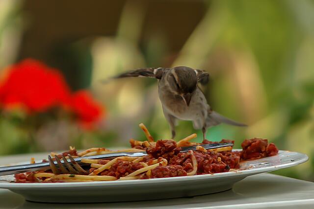 Diebischer Vogel