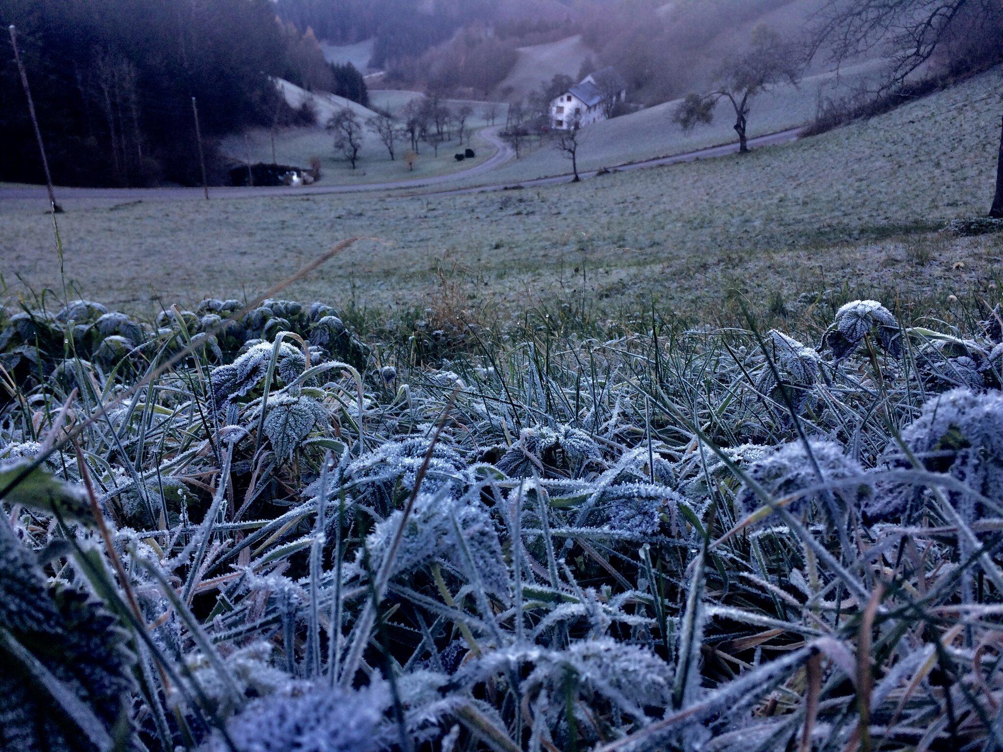 Guten Morgen Frost
