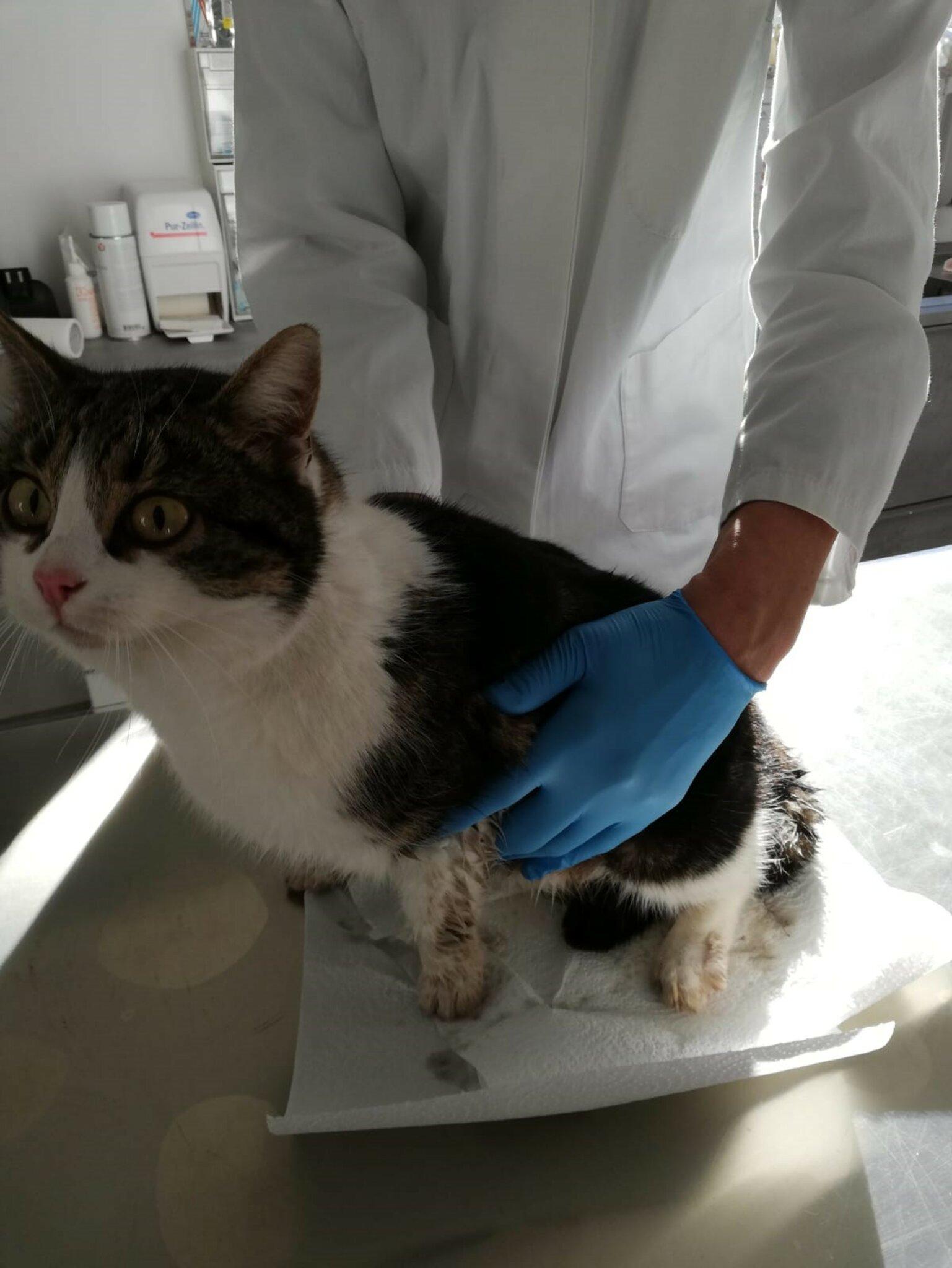 Angefahrene-Katze-ist-am-Leben-Rettungskette-gelungen