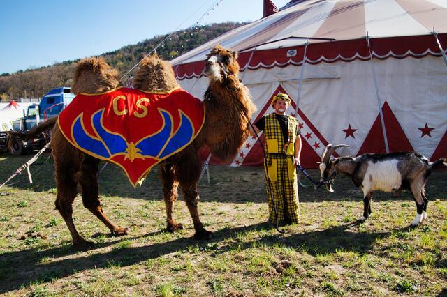 Acht große Kamele und kleine Ponys, zwei Pferde und zwei Ziegen sowie ein kleiner Hund namens Strolch leben hier mit den Spindlers.