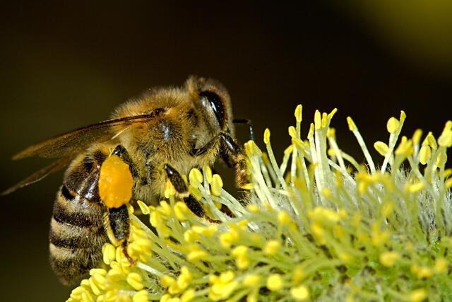 Wildbienen einen guten Start ins Frühjahr bereiten