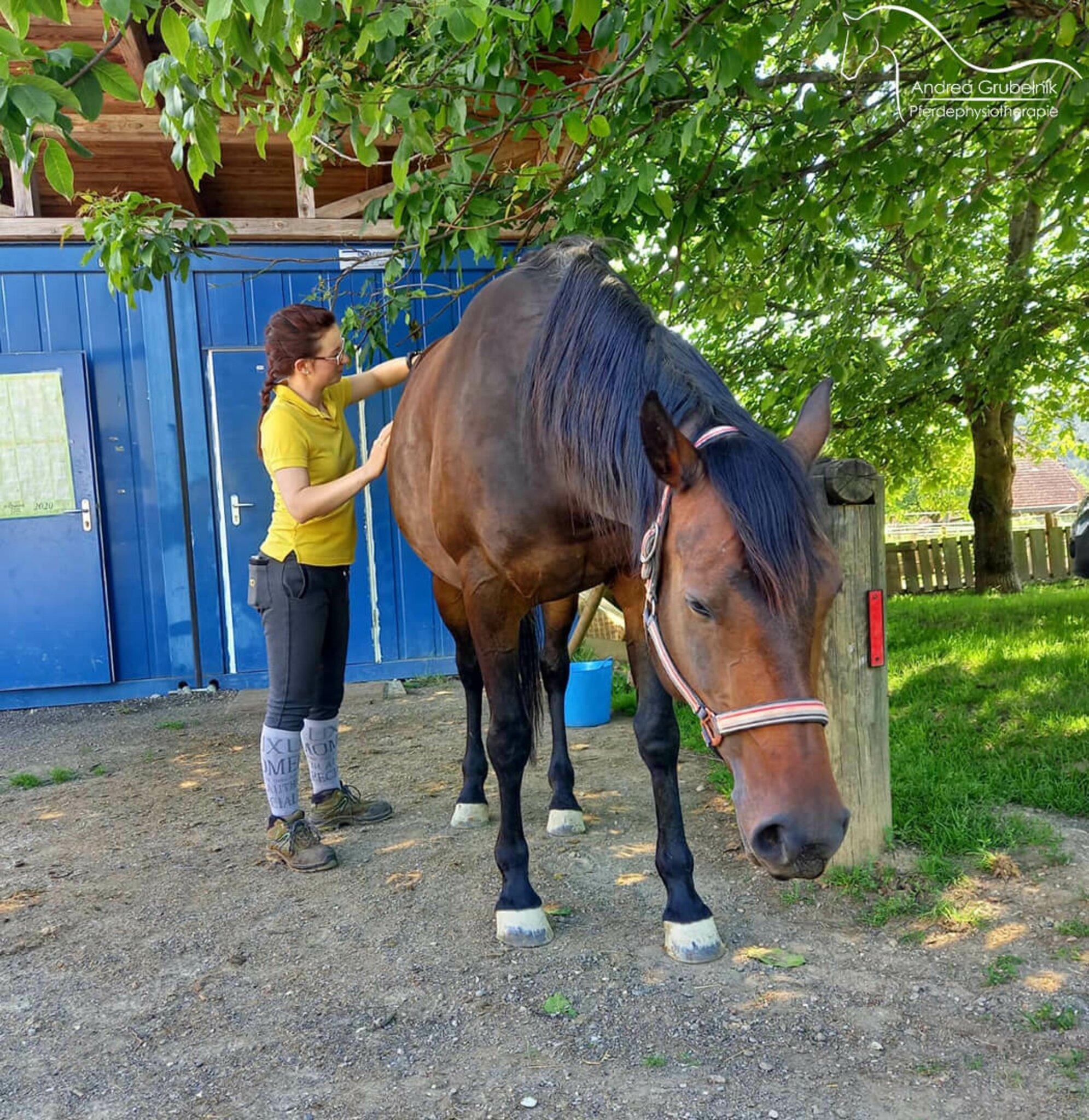 physiotherapie-f-r-pferde
