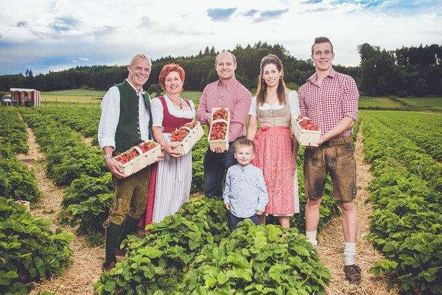Wurzers Erdbeeren aus Bodensdorf bei Wieselburg