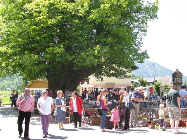 In Faistenau spielt die Linde eine zentrale Rolle.