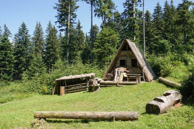 Bei der Rinderhütte in Hof gibt es viel über den Wald zu erfahren.